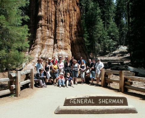 Général Sherman,le-plus-grand-arbre-du-monde