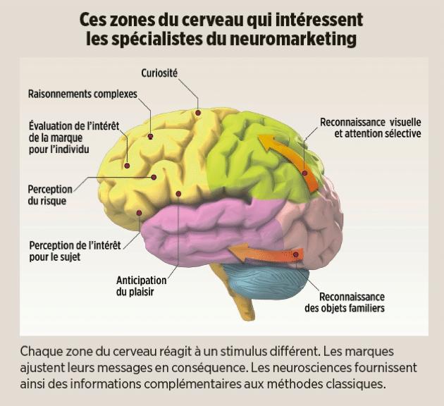 neuromarketing-zones-du-cerveau